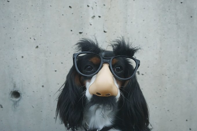 Hund med nesemaske og briller | foto