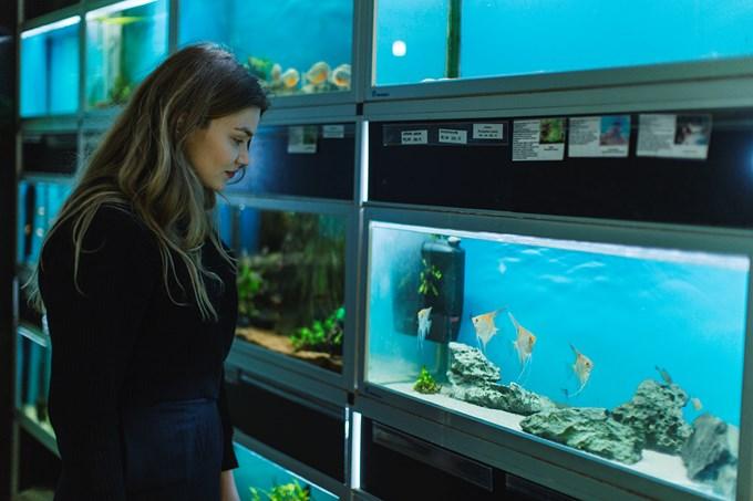 Jente ser på fisker i akvarium. Bilde