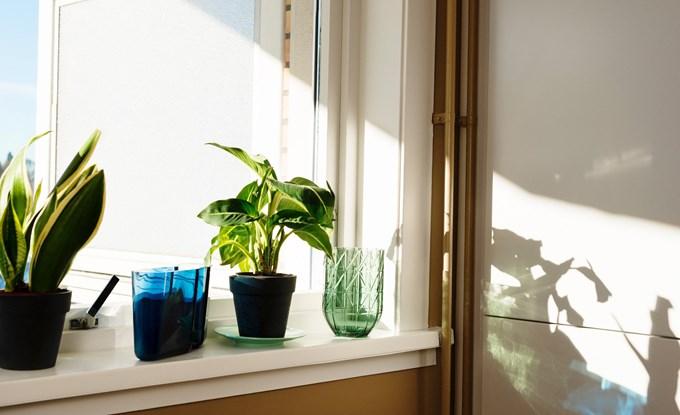 Vinduskarm med grønne planter og to vaser, solen skinner inn.